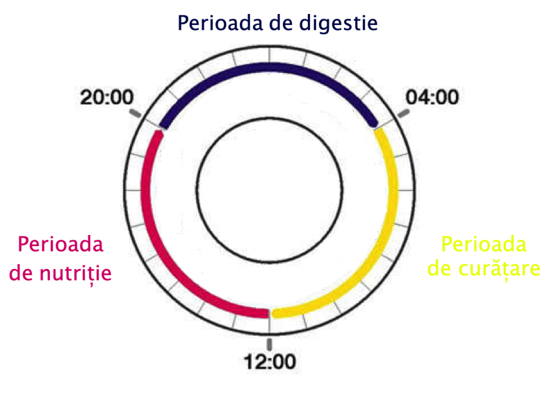 fazele digestive în regimul Rina